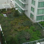 Green Roofing Commercial Roofing